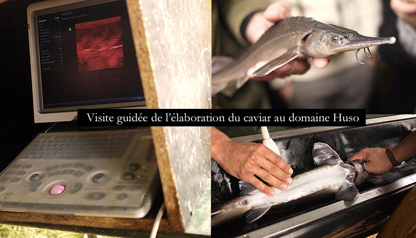 caviar-de-neuvic-46