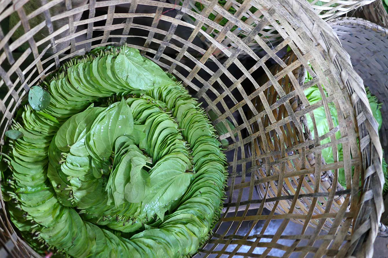 birmanie-feuille-betel