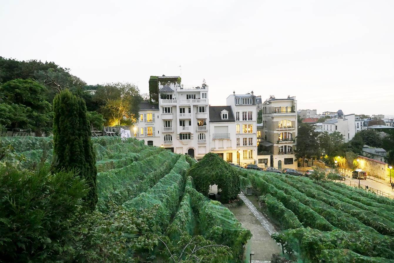 Vue sur les vignes du Clos Montmartre