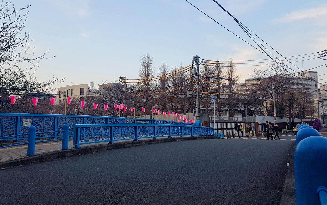 Meguro river park, Tokyo, Sakura, Cherry blossom