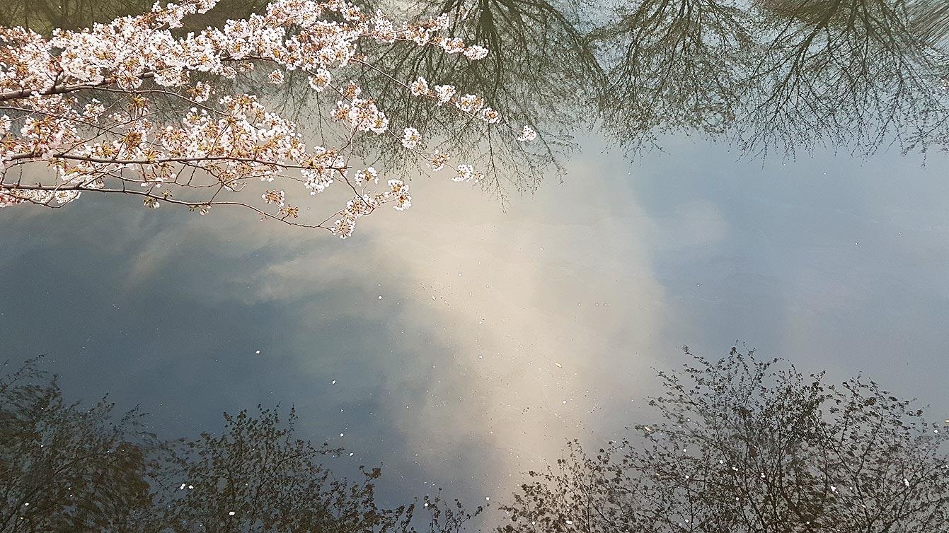 Meguro-river-park06