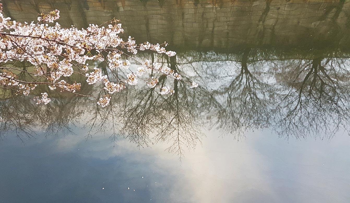 Meguro-river-park09