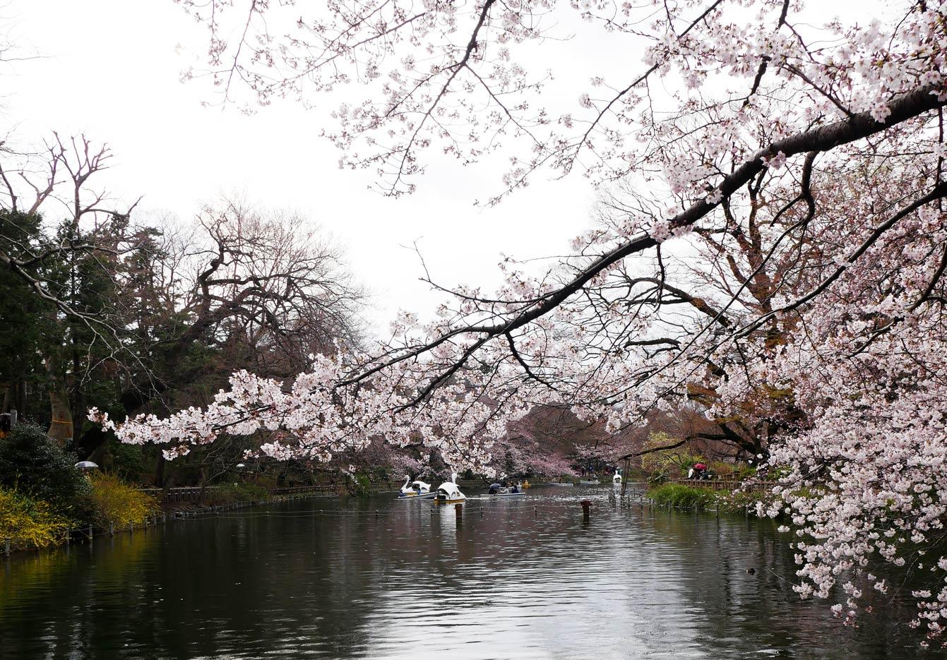 Parc-Inokashira-tokyo-01