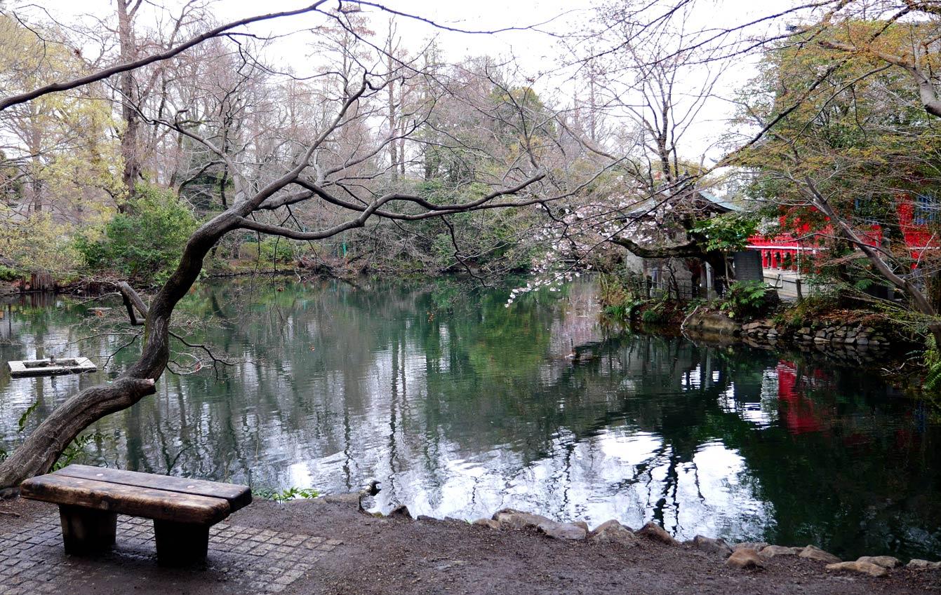 Parc Inokashira, Tokyo, cherry blossom, sakura, cerisiers en fleurs