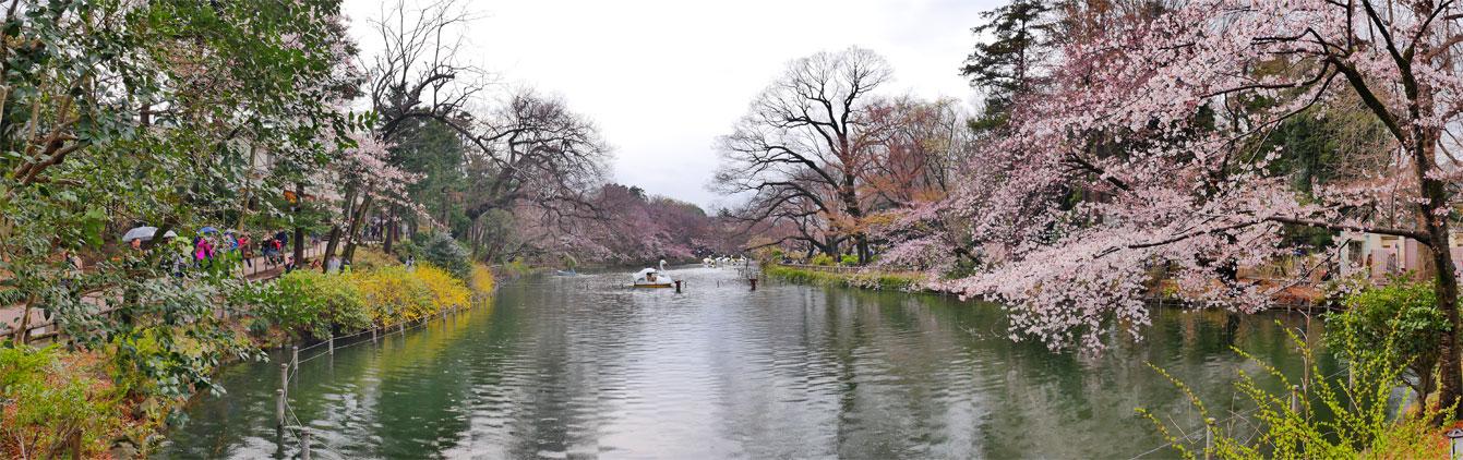 Parc-Inokashira-tokyo-06