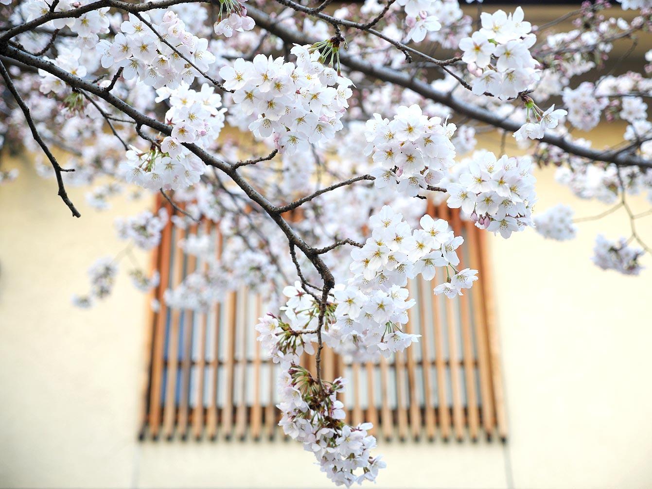 kyoto-Arashiyama-07