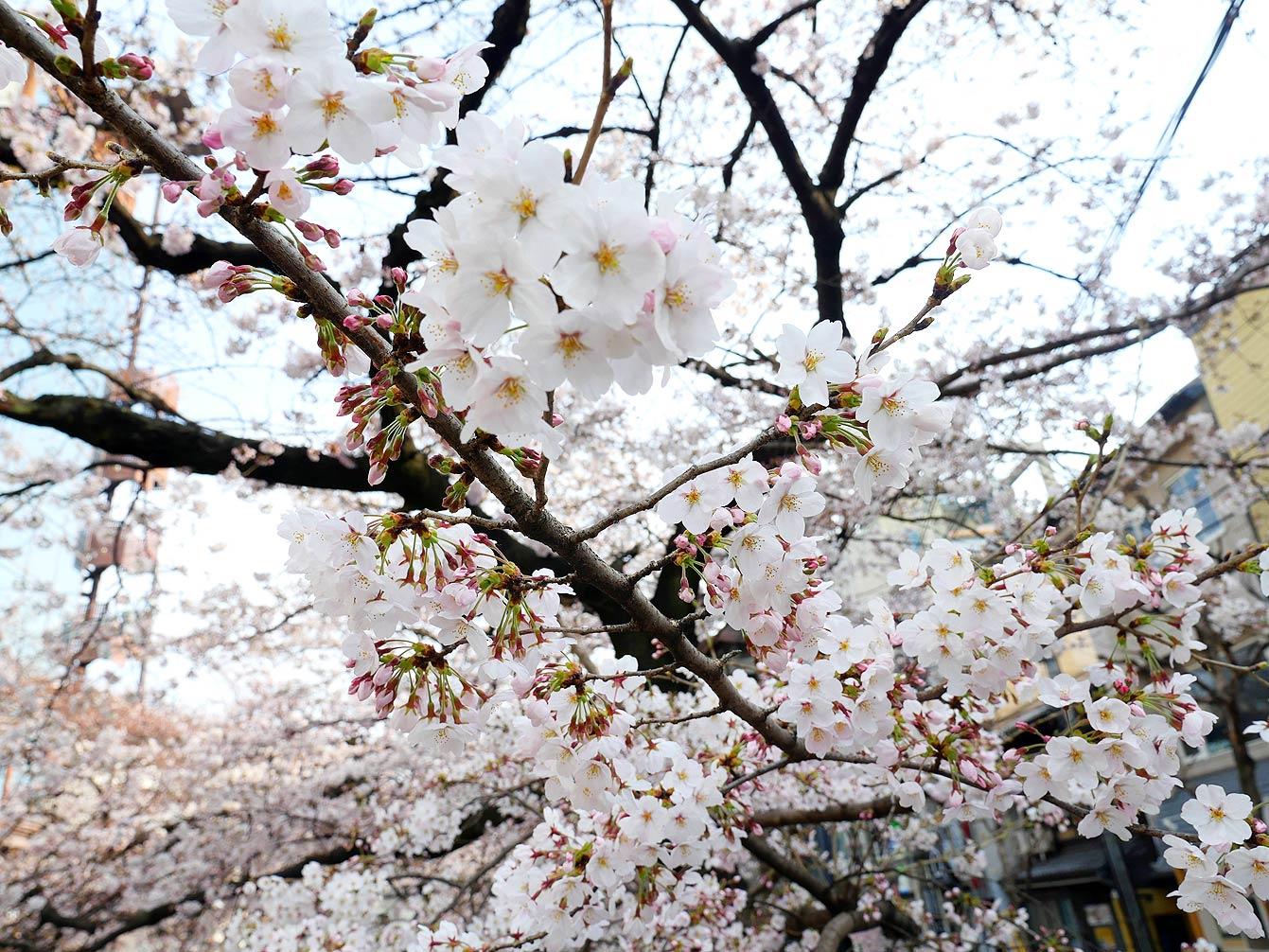 kyoto-Arashiyama-08