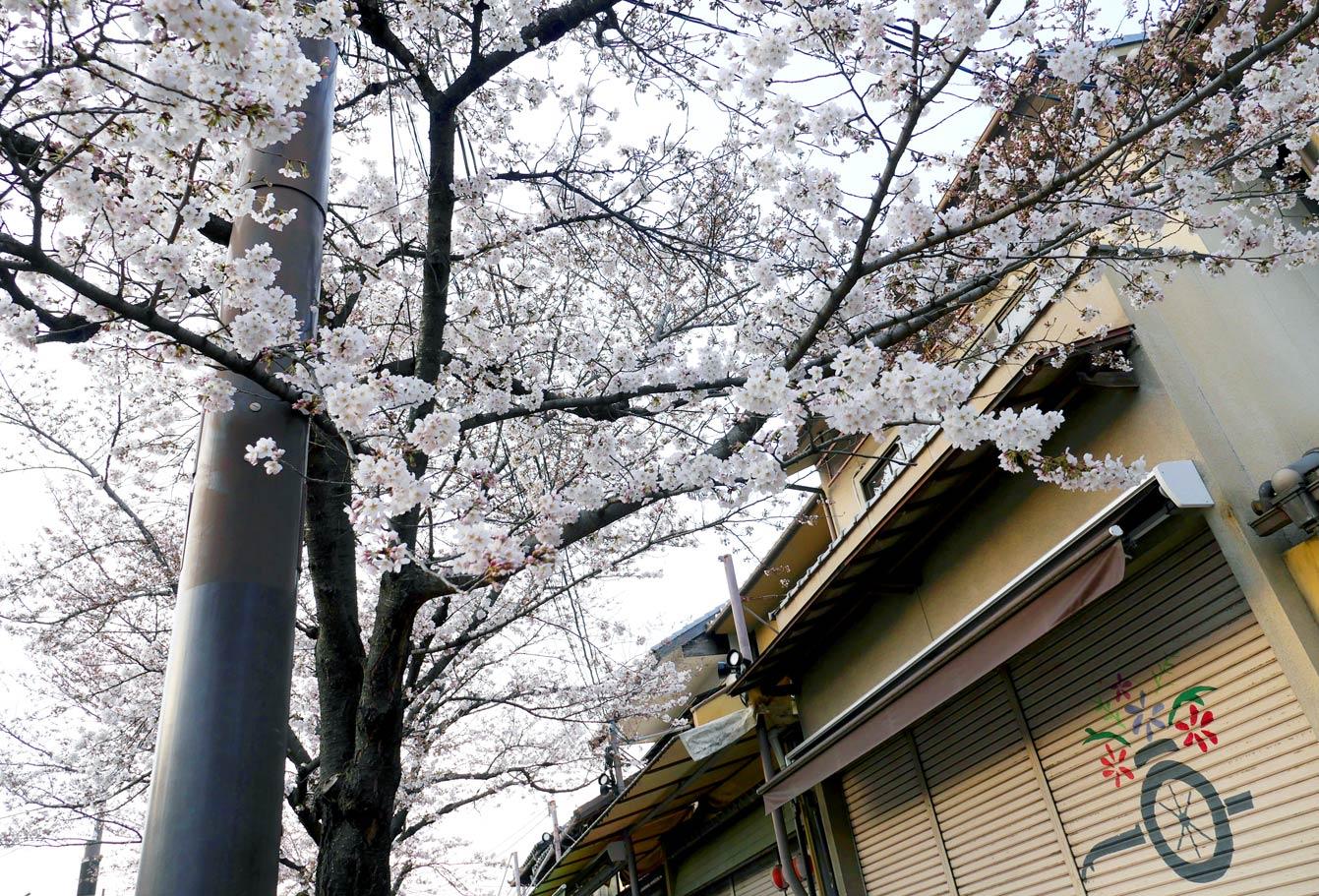 kyoto-Arashiyama-09