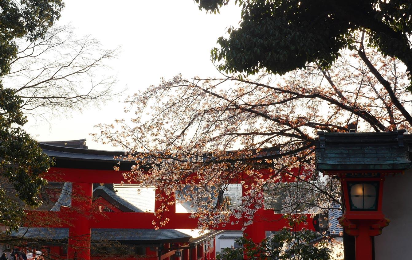 kyoto-fushimi-inari-09