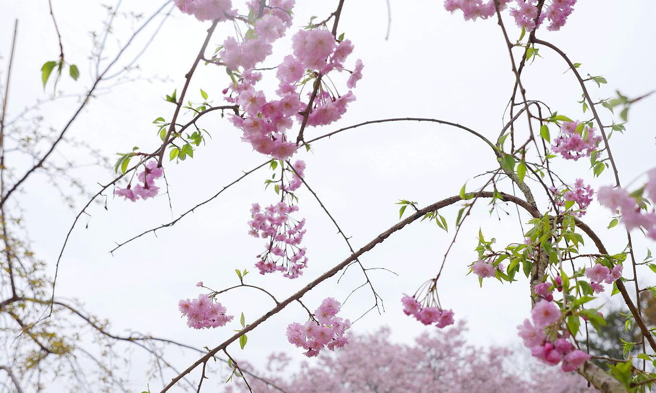 miyajima-06