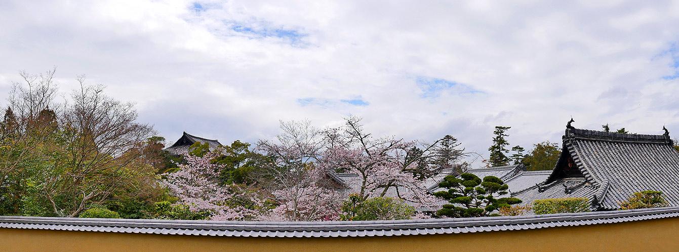 nara-sakura-japon-11
