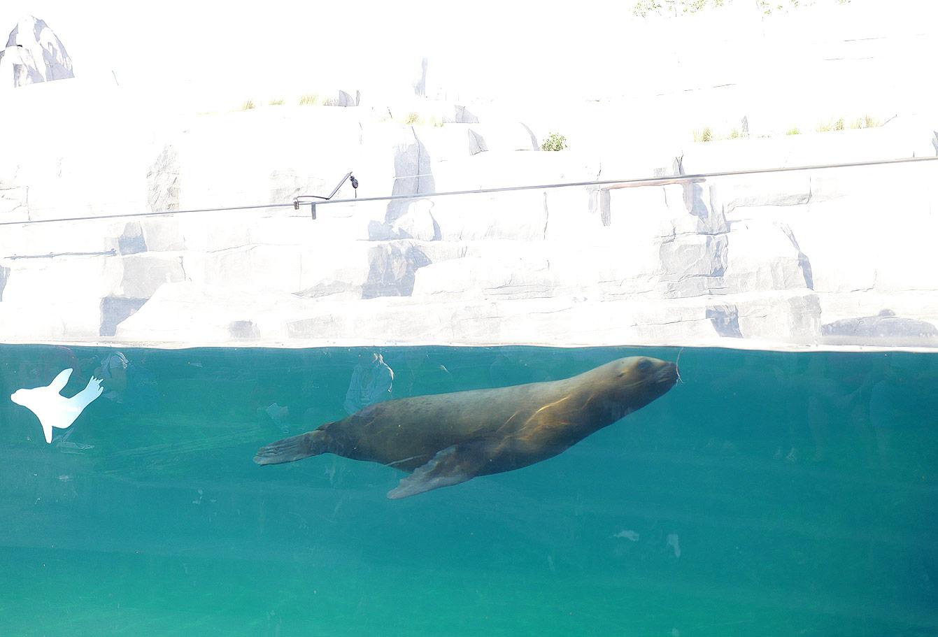 01-parc-zoologique-phoque