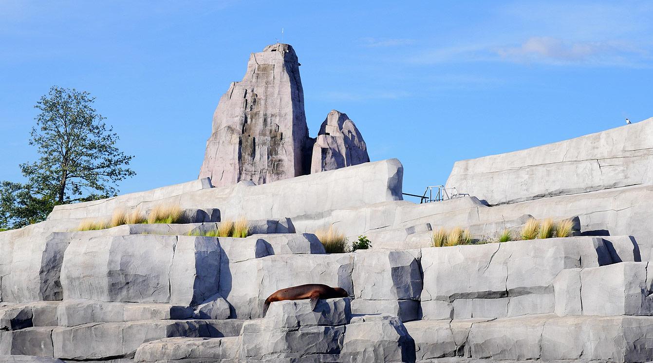 02-parc-zoologique-phoque