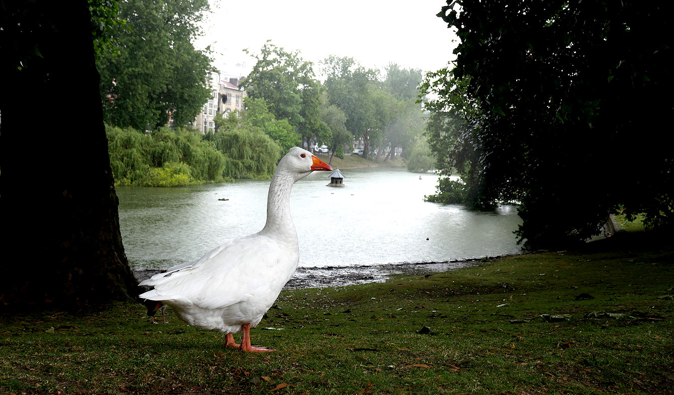 étang d'Ixelles