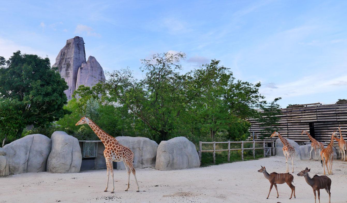 06-parc-zoologique-paris-girafe