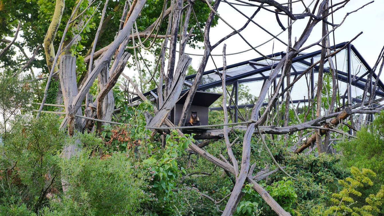 14-parc-zoologique-paris-capucin