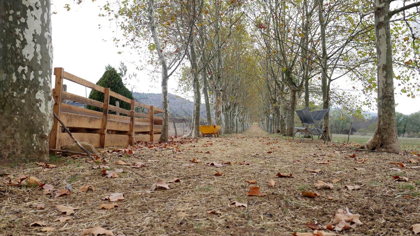 20-domaine-olivier-serres-mirabel