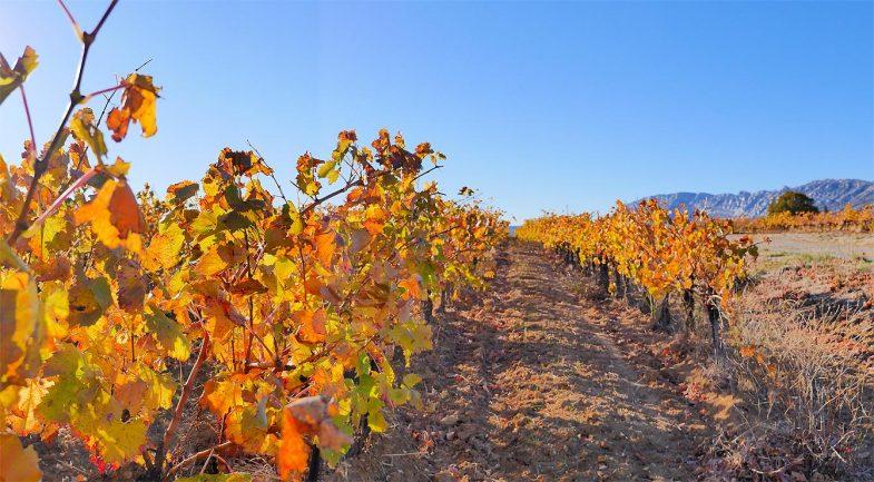 Vignes, Aix-en-Provence