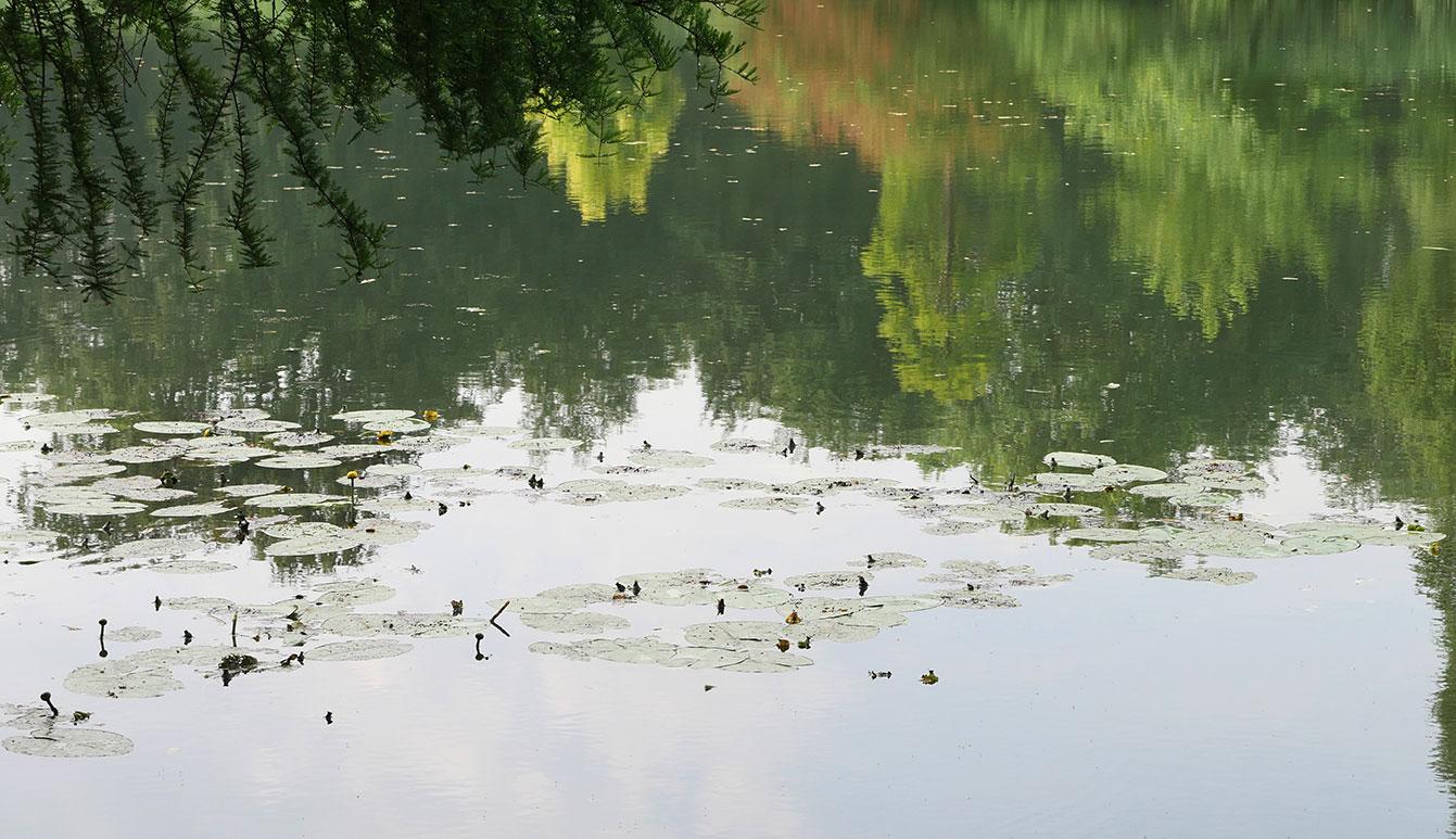 Forêt de Soignes, Bruxelles