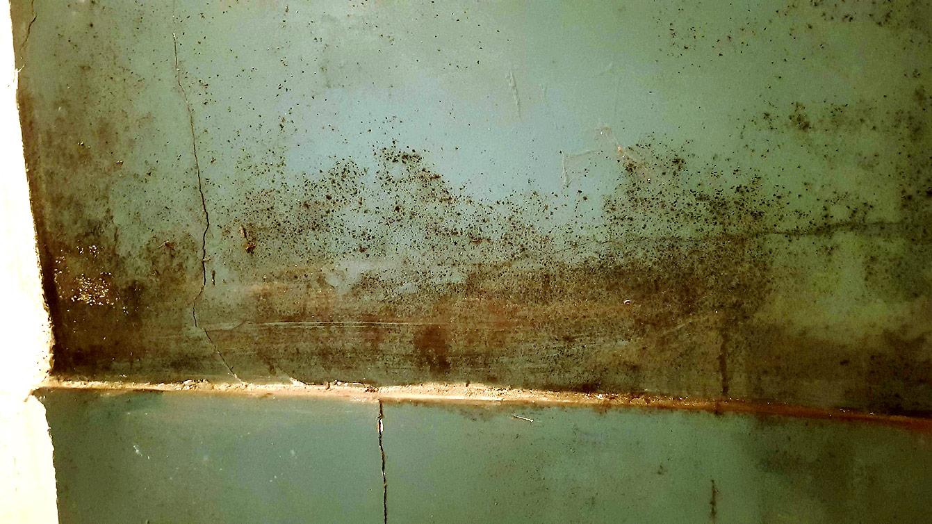 problèmes d'humidité, moisissure, taches noires